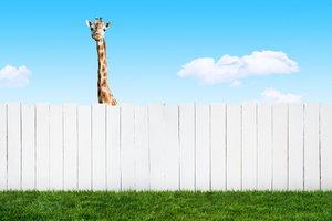 Fences Doityourself Com