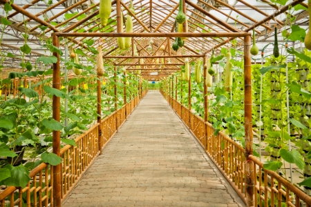 Build Your Own Green House Materials