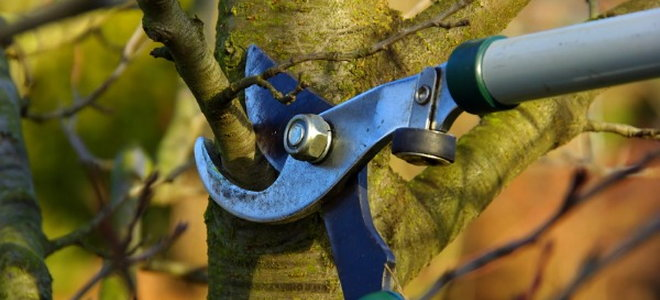 lopper for pruning