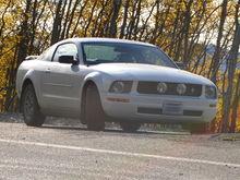 AK Mustang