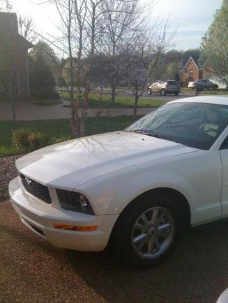 Mustang (1)