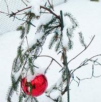 "Christmas 2013...Our version of the ""Charlie Brown Christmas Tree""!"