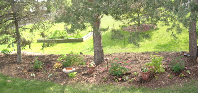 This garden started as a border landscaped with mulch,clay and evergreens 2008