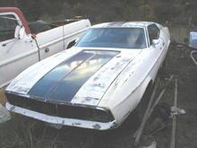 P1010005 Mustang1