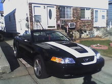 mustang, first day i got it home.