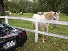 At horse farm