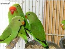 Birds For Sale Wholesale