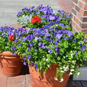 Red, white and blue planters outside American display.