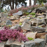 One of our many rock gardens