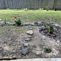 Texas Clay Bog-(year I)
