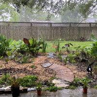 Texas Clay Bog (mid-Early Season- Year II)