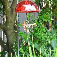 Humming bird feeder in bird display.