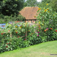 New vegetable garden, planted out with sweet peas, Dahlias,sunflowers, picture taken August 2013