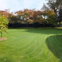 Camellia BoundaryHedging & Curved Hedging