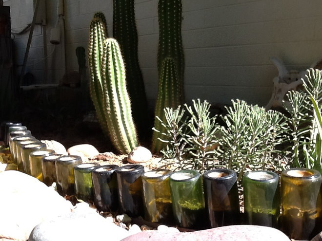 One of my wine bottle beds with Chandelier Plant (Kalanchoe delagoensis) & Cereus visible