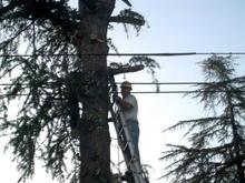 Tree Hugger006