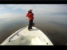 Chesapeake Bay Stripers