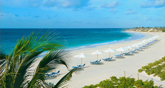 Image Of Palms At Vero Beach In Fl